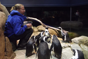 Female sitting among penguins in their exhibit.