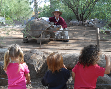 Docent kneeling next to a tortoise in an exhibit with child onlookers.