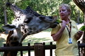 Woman feeding a giraffe.